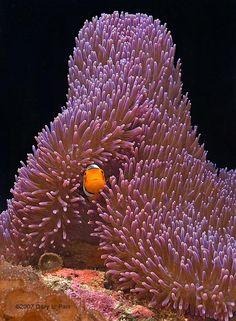 .Reef2reef.com monthly photo winner
