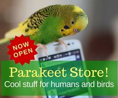 Parakeet store for humans and birds  Shopping at I Love Parakeets http://shop.iloveparakeets.com