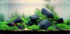 These rocks may not be that much different in size and shape to others used in similar tanks, but the darker color of the rocks really makes the green POP!