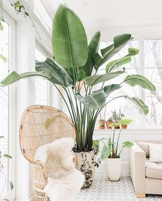woven chair and potted plants in indoor outdoor room / sfgirlbybay