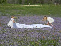 Lavender Spread.