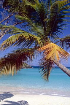 Palm Tree on a Caribbean Beach Photograph by George Oze - Palm Tree on a Caribbean Beach Fine Art Prints and Posters for Sale