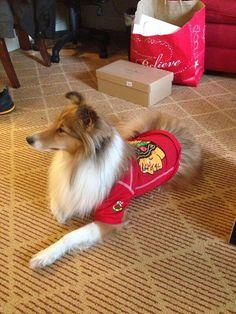Rannta's dog in Hawks gear