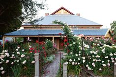 """Australian rose garden featuring the pale pink """"Pierre de Ronsard"""" and the red """" Dublin Bay"""" roses."""
