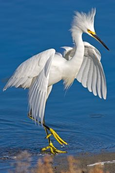 Beautiful egret.