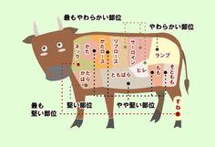 牛肉の部位について