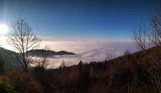 Life is art #forest #nature #fog #blackforest #sasbachwalden