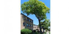 The Perfect Shade Tree