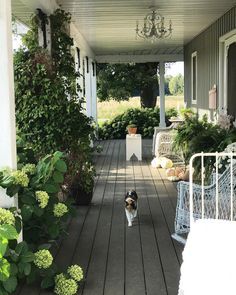 "Tracey Hiebert on Instagram: ""She's never too far away....until it's time to come in for night 😻🙄...... . . . #hydrangeafarmhouse #crazycatlady #farmhouseporch…"""