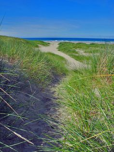 A path through the dunes at Machir Bay on the west coast of Islay, leading you to the beautiful wide sandy beach. Taken on a beautiful sunny June morning.