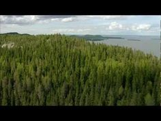Stunning video from Finland; its nature and wonderful four s.- Stunning video from Finland; its nature and wonderful four seasons. Music: Jean … Stunning video from Finland; its nature and wonderful four seasons. National Songs, African States, Viewing Wildlife, Piece Of Music, White Lilies, Helsinki, Classical Music, Four Seasons, Independence Day