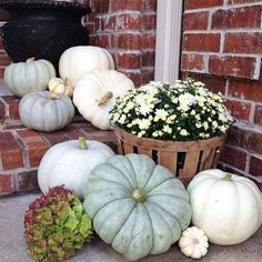 Fall and autumn front porch decorating. Small white pumpkins and larger gray cinderella pumpkins with white mums in a wood basket and a dried hydrangea flower blossom. Country cottage style decor. Rustic simple life.