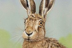 Drawing a Hare in Pastel Pencils