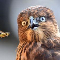 shocked bird
