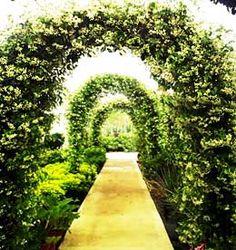 three garden arches in a row