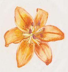 I love tiger lilies