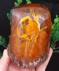 Beautiful amber crab fossil insects 488 g