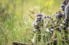 Madagaskar - Insel der Lemuren auf einer Rundreise entdecken! - Rundreisen - Gruppenreisen und Individualreisen - Natürlich Reisen!
