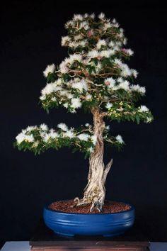 Bonsai. Arte Bonsai #Bonsai art| http://bonsaiart345.hana.lemoncoin.org