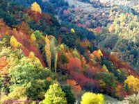 Linas de Broto, Pirineos, Huesca, Aragon, España