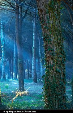 Enchanted Forest | Moyan Brenn