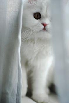 """Sweet Little """"Peek-a-Boo"""" Kitten"""