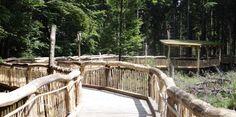 Wilder Weg Kermeter (Nationalpark Eifel) • Wanderung » outdooractive.com