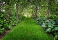 Garden Photograph 8x12'' Print Garden Path Fern by HastyPhoto, $175.00