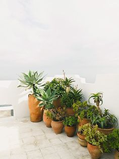 During these darkest days of the year, we are dreaming of long sun-filled days on rooftops covered in lush greenery and ocean views. Photo by Salva Lopez Rooftop Garden, Indoor Garden, Indoor Plants, Outdoor Gardens, Potted Plants, Potted Garden, Balcony Garden, Herb Garden, Contemporary Garden