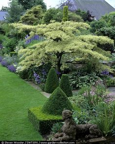 Tara Dillard: contrast foliage textures & colors, high density with low density for maximum pollinator habitat, clipped evergreens allow you to get away with murderous maintenance, focal points, Cornus controversa 'Variegata' in the Blue Border. Gorgeous!