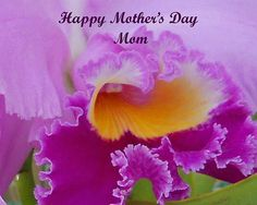 Mom Photograph Photography by Aimee L Maher http://aimee-maher.artistwebsites.com/featured/mom-aimee-maher.html  nature purple floral home décor photo gift $37 Pin it!!!