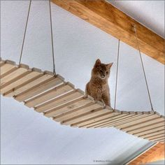 Building instructions for a (cat) suspension bridge parts)-Bauanleitung für eine (Katzen-)Hängebrücke Teile) Yes, I know: the photo is beautiful … but that's not the point here … 🙂 Sometime when I have a photo of a self-made hanging … - Bb Chat, Diy Cat Tree, Cat Run, Cat Playground, Cat Shelves, Cat Enclosure, Cat Cafe, Outdoor Cats, Outdoor Play