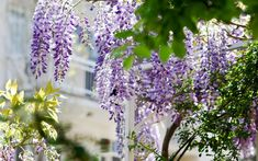 Mediterrane Pflanzen für den Garten