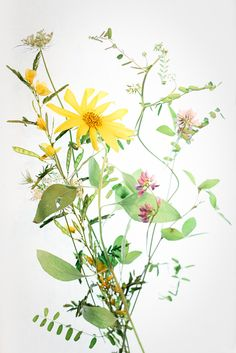 I love wild flowers.  They are often tiny, unnoticed, and imperfect.  But if you bend down and look close, you will find how beautiful they are. This art print features a bunch of wild flowers -  tender, lively, and imperfect.  They will surely bring some fresh air to your space!