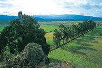 La construcción de canales hace parte de un sistema de riego que se complementa con la plantación forestal.