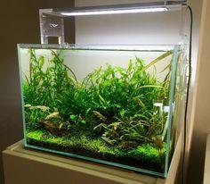 by Parotet Aquascaping, Freshwater Aquarium, Tropical Fish, Fish Tank, Fresh Water, Tanks, Fishbowl, Aquarium, Aquarium Fish Tank