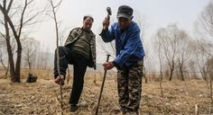 A heartwarming duo, one blind and the other with no arms, are saving their village from floods by planting thousands of trees despite their disabilities