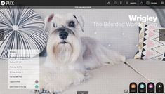Pack: The Social Network for Dog Lovers i