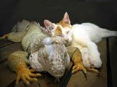 unlikely animal pair