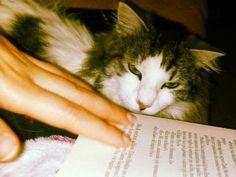 Libri e animali da salvare, al via campagna social 'Books & Pets'