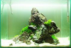 Aquarium Landscape, Cool Tanks, Aquascaping, Herbs, Layout, Plants, Decor, Aquarium, Decoration