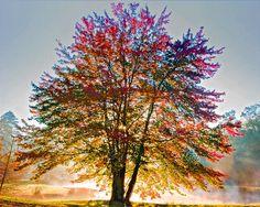 Autumn's Light
