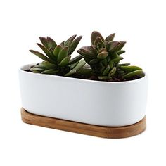 T4U 65 Inch Ceramic White Modern Oval Design succulent Plant PotCactus Plant Pot With Bamboo Tray ** Continue to the product at the image link.