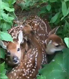 Cute Wild Animals, Baby Animals Pictures, Cute Animal Videos, Rare Animals, Cute Little Animals, Cute Animal Pictures, Cute Funny Animals, Animals And Pets, Strange Animals
