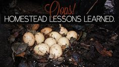 Oops! Homesteading Lessons learned