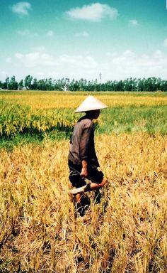 Work in the Rice Fields - Thailand