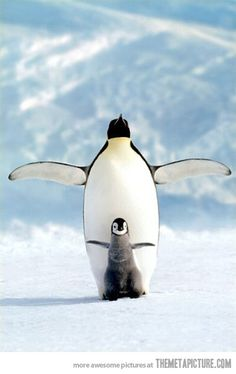 cute penguins <3