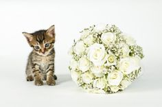 Classic round spring bouquet with roses and lilies (oh and a kitten!).