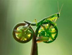 The aptly-named macro photographer, Eco Suparman, is responsible for this stunning shot of a praying mantis appearing to ride a miniature bicycle off into