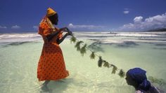 Woman tending to seaweed in Zanzibar.